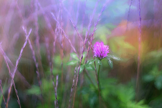 Single Red Clover by June Marie Sobrito