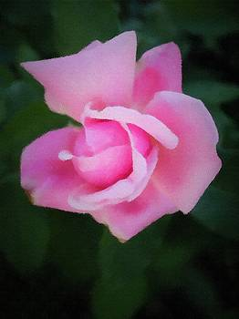 Single Rose by Donald Hill