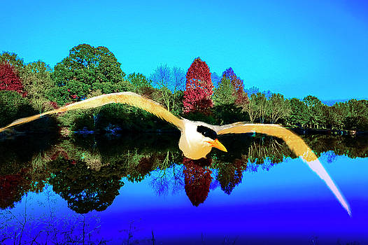 Single Seagull flying in blue clear sky. by Fernando Cruz