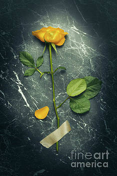 Single Stem Yellow Rose by Amanda Elwell