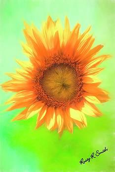 Single sun flower blossom. by Rusty R Smith