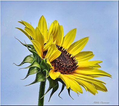 Single Sunflower by Mikki Cucuzzo