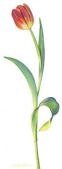 Single Tall Tulip by Sandy Haight