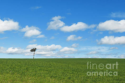 Single tree at top of pasture field under blue sky by Carl Chapman