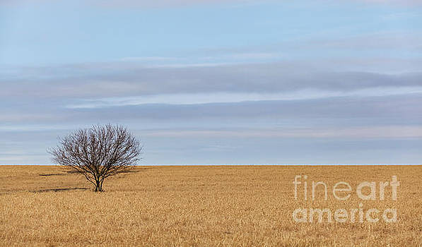 Single Tree in Large Field with cloudy skies by PorqueNo Studios