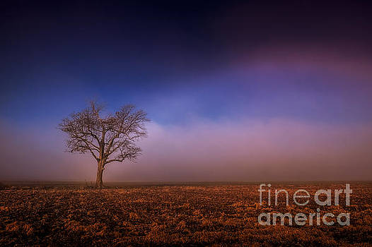 Single Tree in the Mississippi Delta by T Lowry Wilson