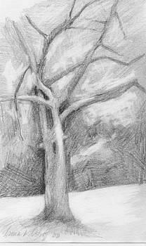 Single Tree by Irma   Ostroff