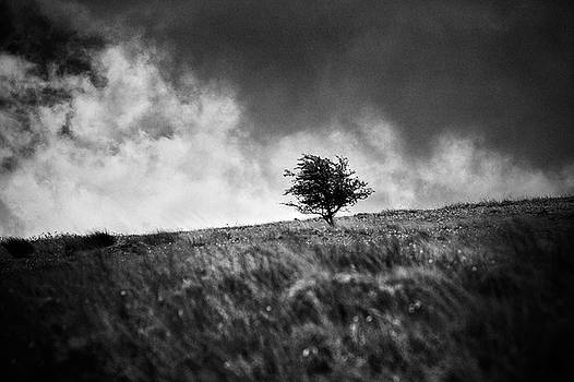 Single Tree on Dartmoor by David Hare