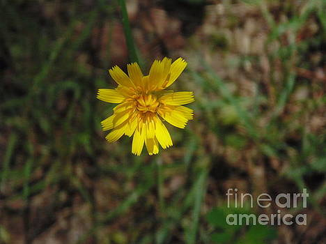 Single Yellow Flower by Ginny Youngblood