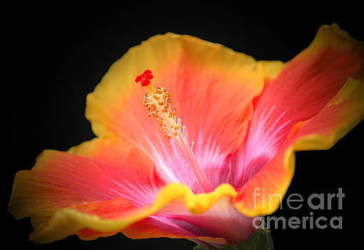 Single Yellow Hibiscus Decor by Candy Frangella