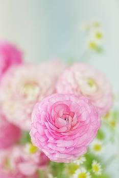 Singular Beauty of Pink Ranunculus by Susan Gary