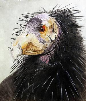 Sir Condor by Jodi Schneider
