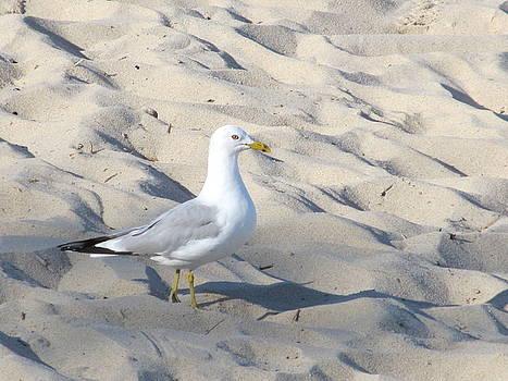 Sir Regal Seagull by Loretta Pokorny