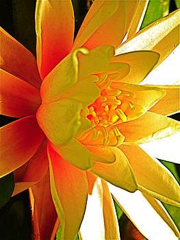 Siren of the Pond    orange by Cheryl Brumfield Knox