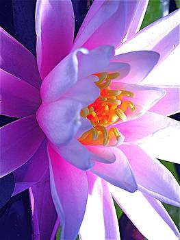 Siren of the Pond    purple by Cheryl Brumfield Knox