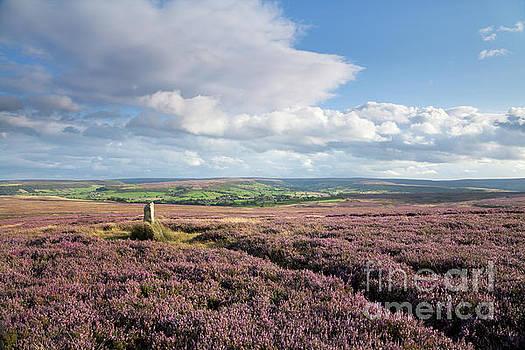 Siss Cross on Danby Low Moor by Gavin Dronfield