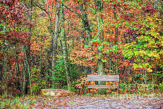 Sit and Watch The Leaves Turn by Kerri Farley