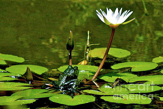 Sitting in a Waterlily Pond by Lehua Pekelo-Stearns