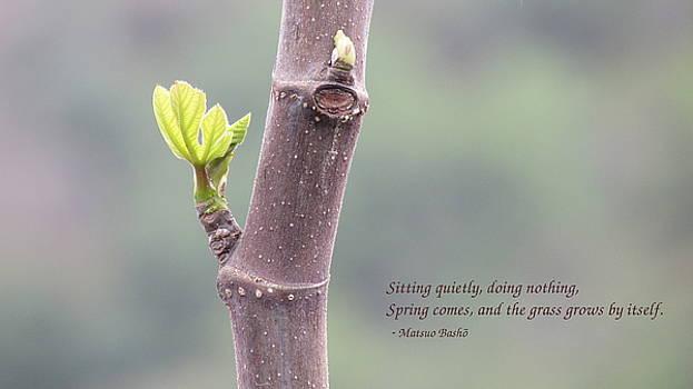 Stephen Dove - Sitting