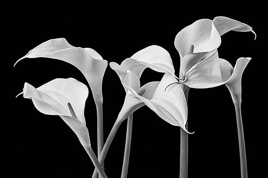 Six Calla Lilies In Black And White by Garry Gay