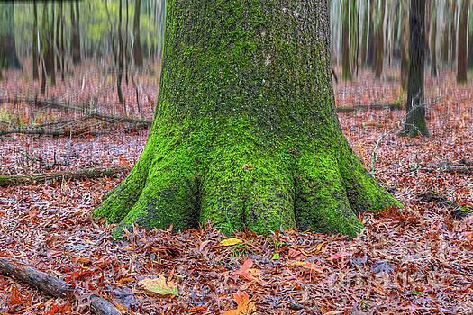 Larry Braun - Six Green Fingers
