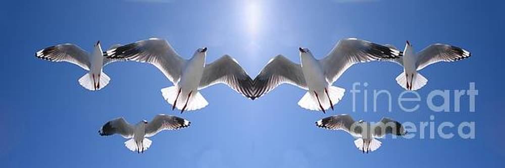 Six Heavenly Backlit Seagulls Flying Overhead in Blue Sky. by Geoff Childs