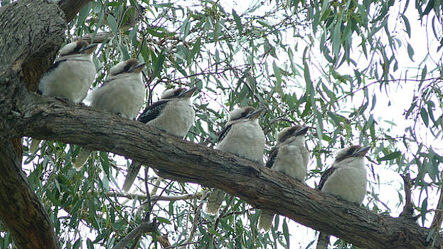 Six In A Row by Evelyn Tambour