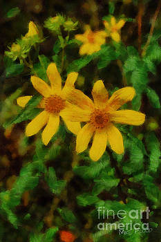 Sixteen Petals  Two Yellow Wildflowers by Michael Flood
