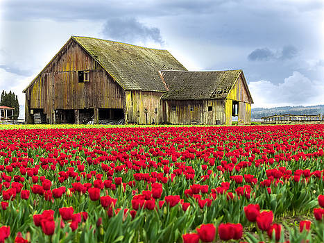 Skagit Valley Barn by Kyle Wasielewski