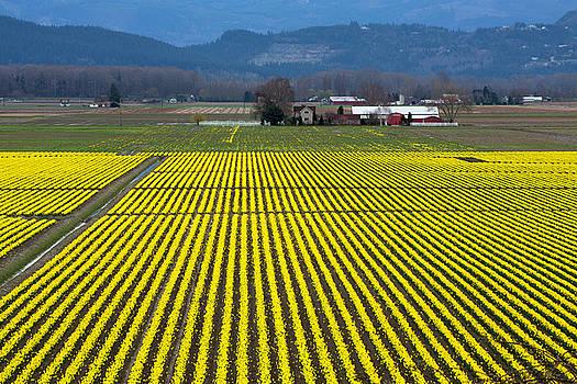 Skagit Valley in Springtime by Bob Stevens