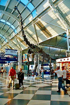Skeleton in the Airport by Daniel  Walker