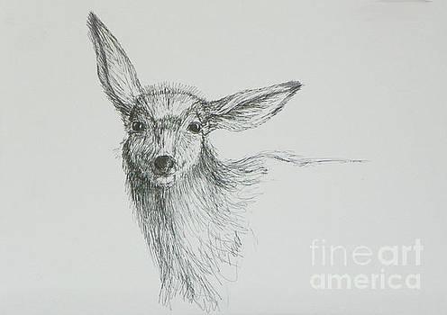 Sketch of a Mule Deer Doe by Dawn Senior-Trask