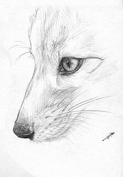 Sketchy Fox Face Study by Brandy Woods