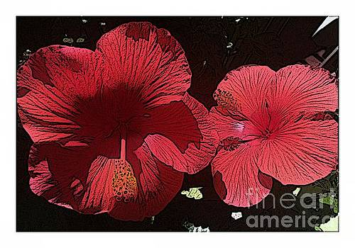 Sketchy Hibiscus by Barbara Griffin