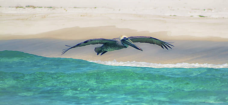 Skimming The Shore by Debra Forand
