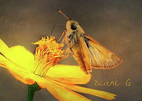 Skipper Butterfly by Diane Giurco