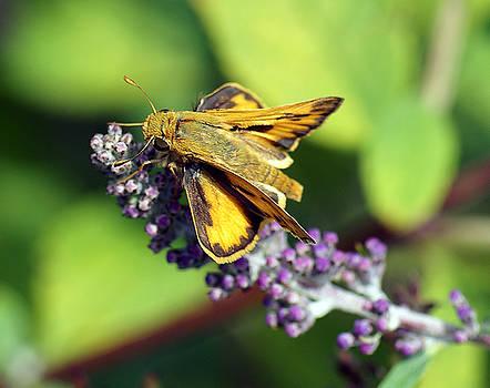 Skipper Butterfly by Rex E Ater