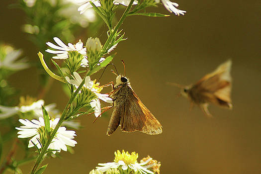 Skipper Date by Thomas Bomstad