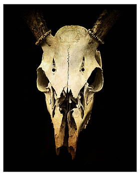 Skull by J Durr Wise