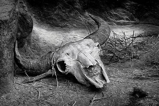 Nikolyn McDonald - Skull