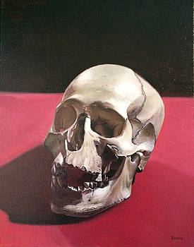 Skull Study by Stuart Curtis