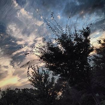 Sky And Bushes by Bridgett Dockray