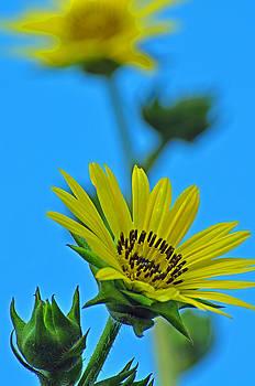Sky Flower by Peter  McIntosh