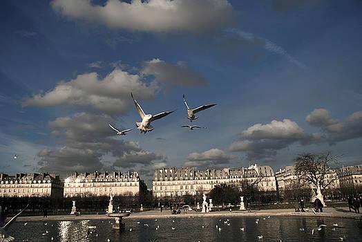 Sky by Milan Mirkovic