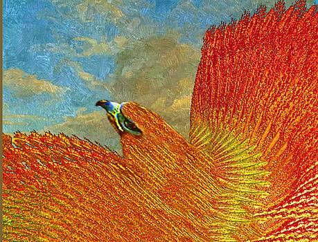 Sky Watcher by Virginia Dillman