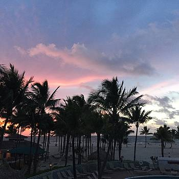 Sky With Palm Trees by Christina Schott
