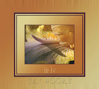 Skyhooks Iris by Patricia Whitaker