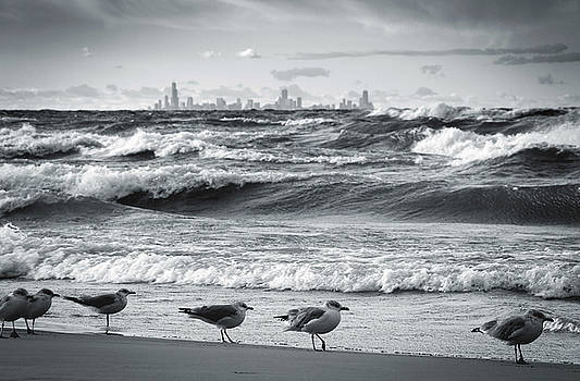 Skyline and Seagulls by Jackie Novak
