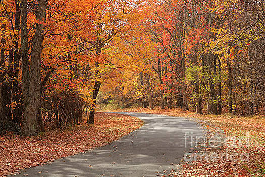 Skyline Drive at the Overlook at Fishers Gap Skyline Drive by Louise Heusinkveld