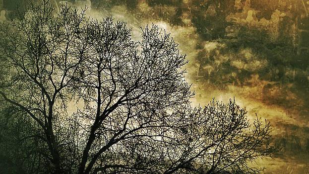 Skyward by Al Harden